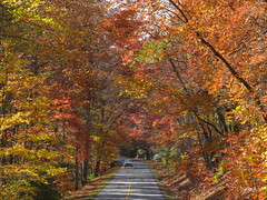 road of dreams ... (october blue ( on/off )) Tags: thegalaxy autofocus saariysqualitypictures