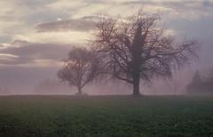 ----oO- (Laurent Moose) Tags: fuji epson v600 fujifilm xtra mist clouds