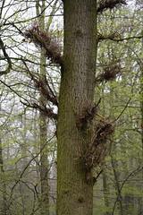 ckuchem-0269 (christine_kuchem) Tags: baumstumpf bäume frühjahr frühjahrblüher frühling laubbäume laubwald wald waldweg bewachsen kahl kalhl naturnah äste