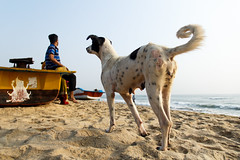 @Marina Beach (Raja. S) Tags: india rajasubramaniyanphotography marinabeach tamilnadu people dog chennai