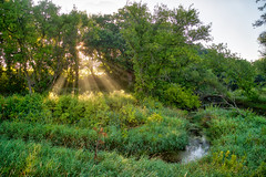 Natural Rays (giantmike) Tags: madison river light creek hdr water trees stream morning wi rays mist nature canonef24105mmf4lis