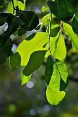 Green (Deb Jones1) Tags: park macro green nature beauty leaves canon garden botanical outdoors leaf flora flickrduel flickrawards debjones1