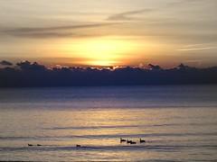 Milwaukee Lakefront Dawn on Lake Michigan (MalaneyStuff) Tags: sunrise day cloudy lakemichigan milwaukee dwan