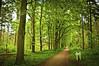 Lage Vuursche (George Pachantouris) Tags: tree green nature netherlands forest europe dunes dune holand soesterduinen lagevuursche flickraward diamondclassphotographer mygearandme