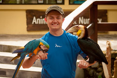 sam and some birds (raspberrytart) Tags: bali birds animal animals indonesia nikon sam macaw hornbill d90 sukawati balizoo