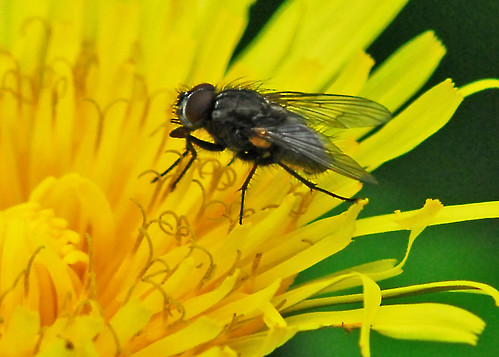 fly on yellow
