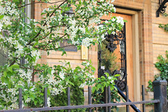 Lovely Entrance (trevorhanson7) Tags: door trees flower buds budding
