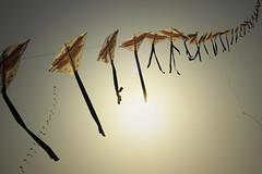 'sommerherbst' (Gregor Teggatz) Tags: autumn summer berlin fall gold golden wind sommer herbst flughafen gegenlicht tempelhof magie drachen lichtspiel grnstich sonnenlicht berlinerfenster magisch farbfoto gelbstich sommerherbst gelbstichig