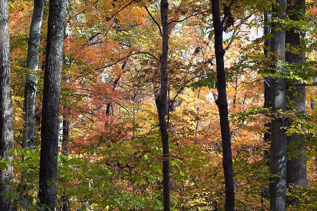 Hoosier National Forest - Pioneer Mothers Memorial Forest - November 2008