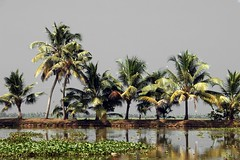 Palme backwaters taroc
