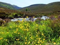 Scenic Scotland (Rick Ellerman) Tags: park uk greatbritain nature forest scotland nationalpark highlands picasa highland finepix aviemore cairngorms abernethyforest glenmore abernethy fujifim hs30 ryovan hs30exr