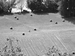 bicylette ! (CCybo) Tags: blackandwhite bw white black byn blancoynegro blanco monochrome field bike nikon noir noiretblanc negro nb bicyclette blanc vlo champ ballot monochroma negroyblanco nyb incoloro monochromie scharwz d3100 nikond3100