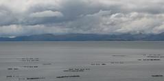 rive du lac Titicaca (Micheline Canal) Tags: titicaca landscape lac paysage pérou église amériquedusud