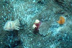 DSC_5724 (d3_plus) Tags: sea sky snorkeling freediving izu g12 伊豆 シュノーケリング 南伊豆 nikon1 togai hirizo 中木 フリーダイビング ヒリゾ浜 nakagi canonpowershotg12 トガイ浜 nikon1j1 isw16sh 1nikkor185mmf18 hirizobeach togaibeach