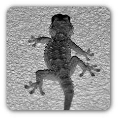 Visiteur du soir (2) (Jean-Luc Lopoldi) Tags: bw evening noiretblanc terrasse ceiling ctedazur soir plafond lzard