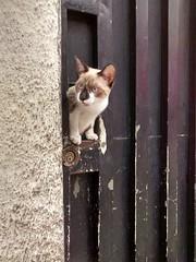 Quem é? (Márcio Vinícius Pinheiro) Tags: cat feline gato felino feliscatus