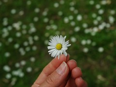 simplicity (miradel) Tags: travel flowers wild people white flower color colour berlin nature beauty smart vintage germany stars person is spring soft colours hand natural princess little innocent free prince inner story fairy simplicity inside colourful persons moment delicate simple rapunzel tale meaningful wildness