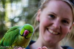 Parakeet (Andrea Bovolo) Tags: holland netherlands 50mm zoo nikon utrecht wildlife nederland amersfoort dierentuin 18105 d7100 nikond7100