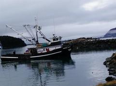 Oscar's Dock and Boats of Kodiak (Gruscana) Tags: birds alaska boats fishing gulls sealions eagles kodiak vessels pacificisland emeraldisland oscarsboats