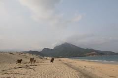 IMG_6858 (jsgcowley) Tags: asia vietnam quynhon beach sea landscape animal cow mountain