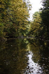 AutumnReflections (Photo Amy) Tags: autumn canon50d change ef28135mm3556 fall jacobsburg jacobsburgstatepark leaf leaves nature northeast pennsylvania stream transition tree trees