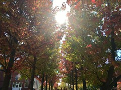 Autumn Sunlight. (Polterguy30) Tags: arsenalcenter sunlight sun fall autumn massachusetts watertown