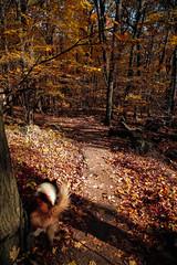 7Q7A6206 (armincreates) Tags: nature fall colors trees lake mountains hike dog puppy beauty trail panorama sunset cows farm wisconsin illinois usa walk
