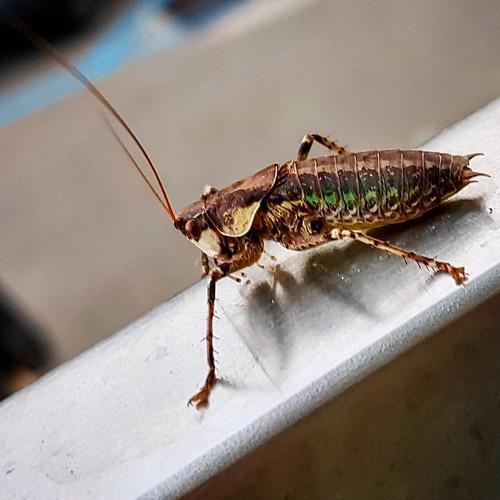 #taormina #animals #bugs #italy