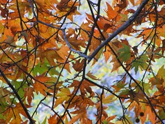 (mahyar hejazi) Tags: fall colors iran tehran  autumn herbst
