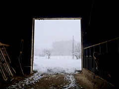 Snowy Days (-Aldievel-) Tags: snow snowfall molise italia italy appennines appenninosannita neve nevicata stalla vacca vacche cows countryside cowshed cow