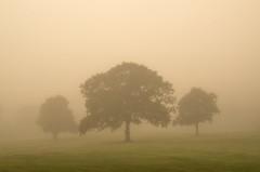 Shrouded (Glenn D Reay) Tags: chesterlestreet mist misty fog atmosphere atmospheric trees pentaxart pentax k30 sigma1770hsm glennreay
