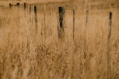 Field Of Dreams (catmccray) Tags: fence goldengrass fall autumn