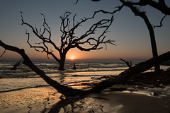 Boneyard Sunrise (Mark Wingfield) Tags: beach driftwood sunrise sun boneyard georgia jeckyll island outdoors outside nikon d750 2470 28 handheld atlantic ocean wood tree clouds sky orange water beautiful nature pretty sunset outdoor