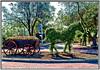 Our Sculptured Traffic Islands (Mike Goldberg) Tags: horsewagon sculpture living plantmaterial canong16 effects jerusalem mikegoldberg tgif