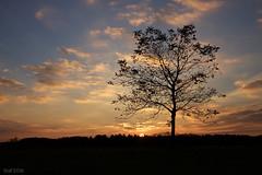Sky and Tree (leaving-the-moon) Tags: 201610 autum baden baume colors deutschland germany goodlight hebst himmel kraichgau landscape landschaft natur nature season sky sonnenuntergang sundown wolken