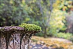Moss (Jistfoties) Tags: dawyckgardens autumn scottishborders botanicgardens landscape canon5d canon24105f4