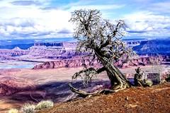 I am a survivor of this eroding environment (kc_hoang) Tags: deadhorsepoint lifeelevated worldwidelandscapes travelplanet mountainbiking tamminhphotography kodakmoment