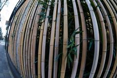 Bamboo grating (nak.viognier) Tags: bamboograting nakanoshima osaka 竹格子 中之島 olympusepl3 lumixgfisheye8mmf35