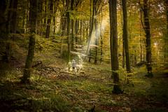 Fairy Tale (Jan Moons) Tags: luxemburg mullerthal nikon nikond600 d600 2485mm forest trees light devine fairy family kids amazing sun leaves autumn fall