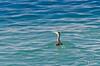 NZ 3532 - Nueva Zelanda - Kaikoura - Sperm Whale y Dusky dolphins (Jano Escuer) Tags: nuevazelanda oceanía