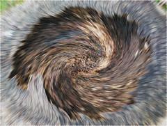 332.2 Twirl (Dominic@Caterham) Tags: bark tree twirl