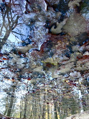 Weight Leafter (andressolo) Tags: leaves leaf puddle charco hojas trees tree forest colours colors reflections reflect reflected reflejos reflejo reflection distortions distorted distortion