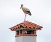 IMG_0057  chimney stork (pinktigger) Tags: stork cigüeña storch cicogne ooievaar ciconiaciconia cicogna cegonha bird nature fagagna feagne friuli italy italia oasideiquadris animal outdoor chimney