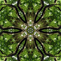 Kaleido Abstract 1540 (Lostash) Tags: art abstract patterns symmetry colours shapes textures kaleidoscopes