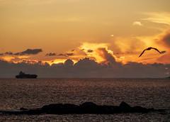 Atardecer(Alcabre)-PB220001 (peruchojr) Tags: gaviota radevigo barco nubes
