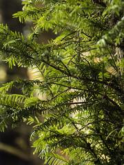 Autumn Colours (Triker-Sticks) Tags: trees nature leaves autumn thelodge rspb reserve england foliage sandy