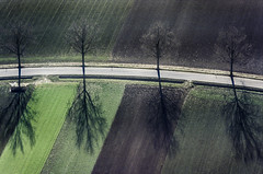 Strong Shadows (Aerial Photography) Tags: by opf r 01121994 0404xxx7 baum baumreihe bume fotoklausleidorfwwwleidorfde landschaft landstrae laubbaum luftaufnahme luftbild pfakofen schatten st2146 strae vgalteglofsheim vier aerial deciduoustree foliagetree four landscape leaftree lineoftrees outdoor road rowoftrees shadow tree trees
