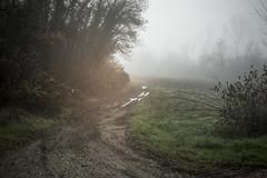 Autunno (sdrusna79) Tags: autunno nebbia fog bosco atmosphere atmosfera paesaggio landscape nikond7100 nikon