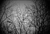 limbo (TommyOshima) Tags: tree monochrome blackandwhite blackwhite fujifilm superpresto 1600 leica noctilux f10 leicanoctilux50mmf10 winter