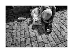 Two beggars (Jan Dobrovsky) Tags: contrast document leicaq outdoor people prague street dog bw